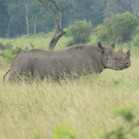 Golf and Masai Mara Tour