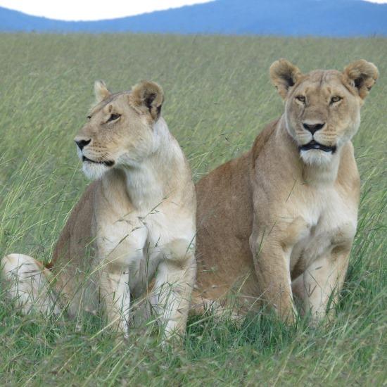Kenya Dream Safari
