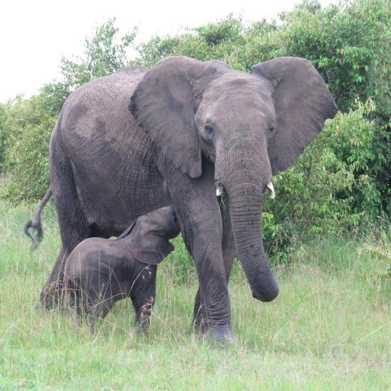 Kenya Mini Safari